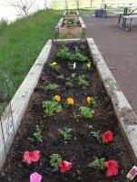 Remember our little rainbow garden?