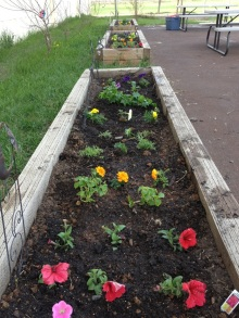 Remember our little rainbow garden?